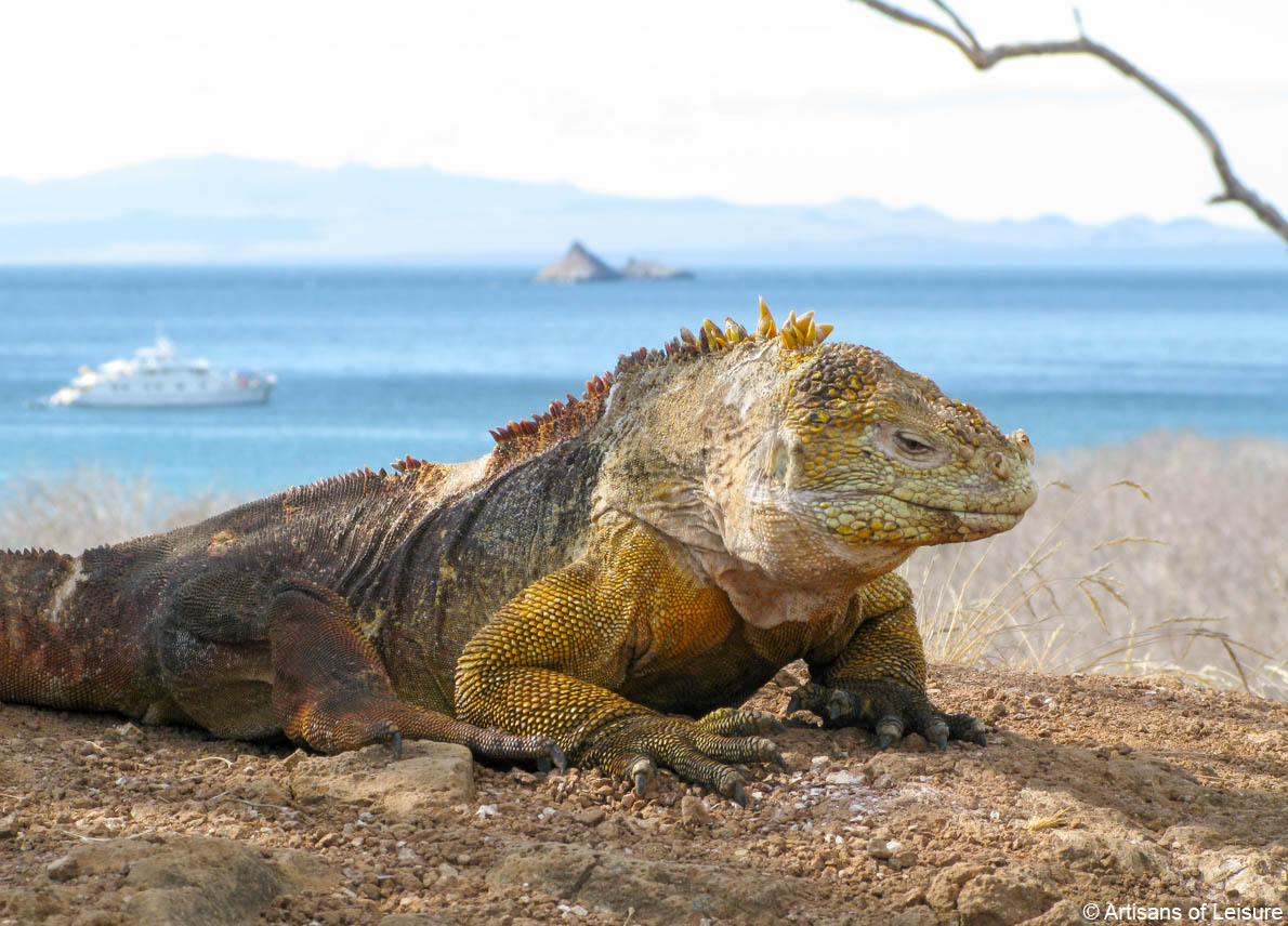 private Ecuador and Galapagos tours