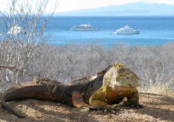 luxury Galapagos tours